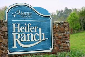 Heifer-Ranch1