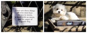 Beware_of_dog_L (2)