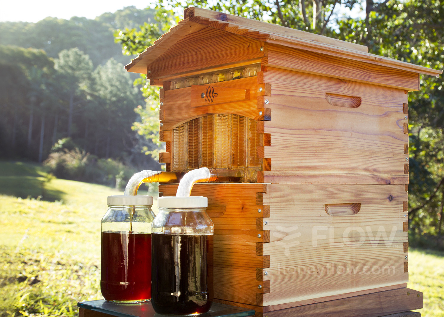 this author bought a flow hive what happened next will amaze you