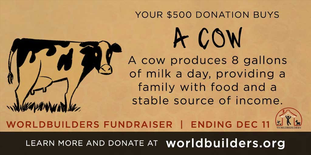 A Dream of Cows…